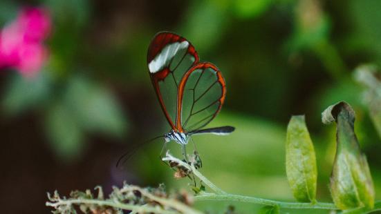 Conservación Biológica: mitos y realidades